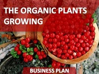 Business Plan of the Organic Plants Growing