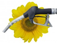 Заказать анализ рынка биотоплива
