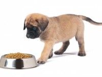 Рынок корма для собак
