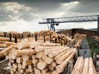 Рынок лесопромышленного рынка