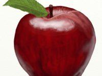 Маркетинговое исследование рынка яблок
